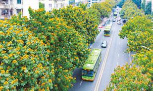南宁公共交通发展质量水平有较大提升