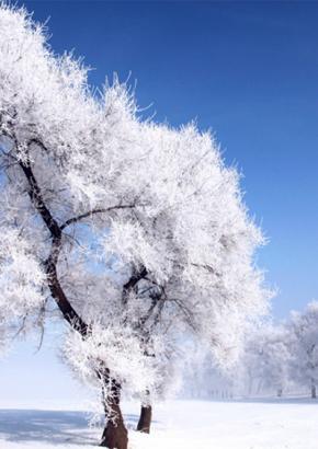 雾凇冰雪节