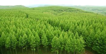林业.jpg