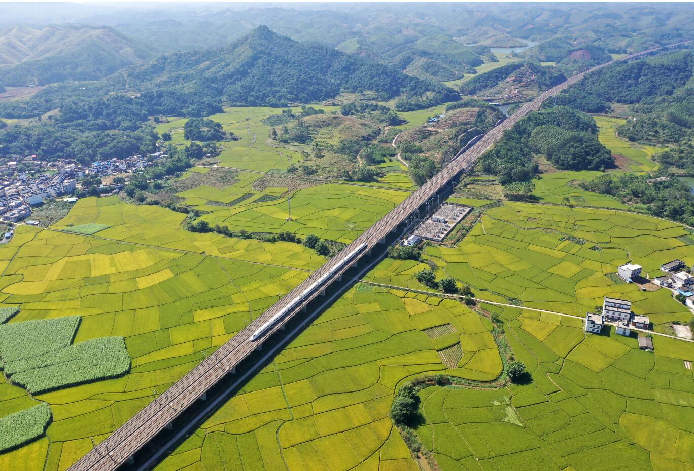 廣西賓陽:開往豐收的列車(圖)