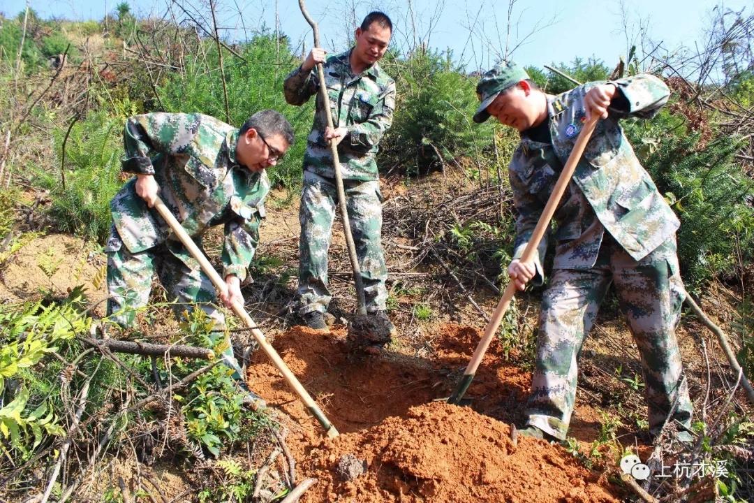 人人植树处处造林!福建上杭新时代文明实践活动为家园添绿