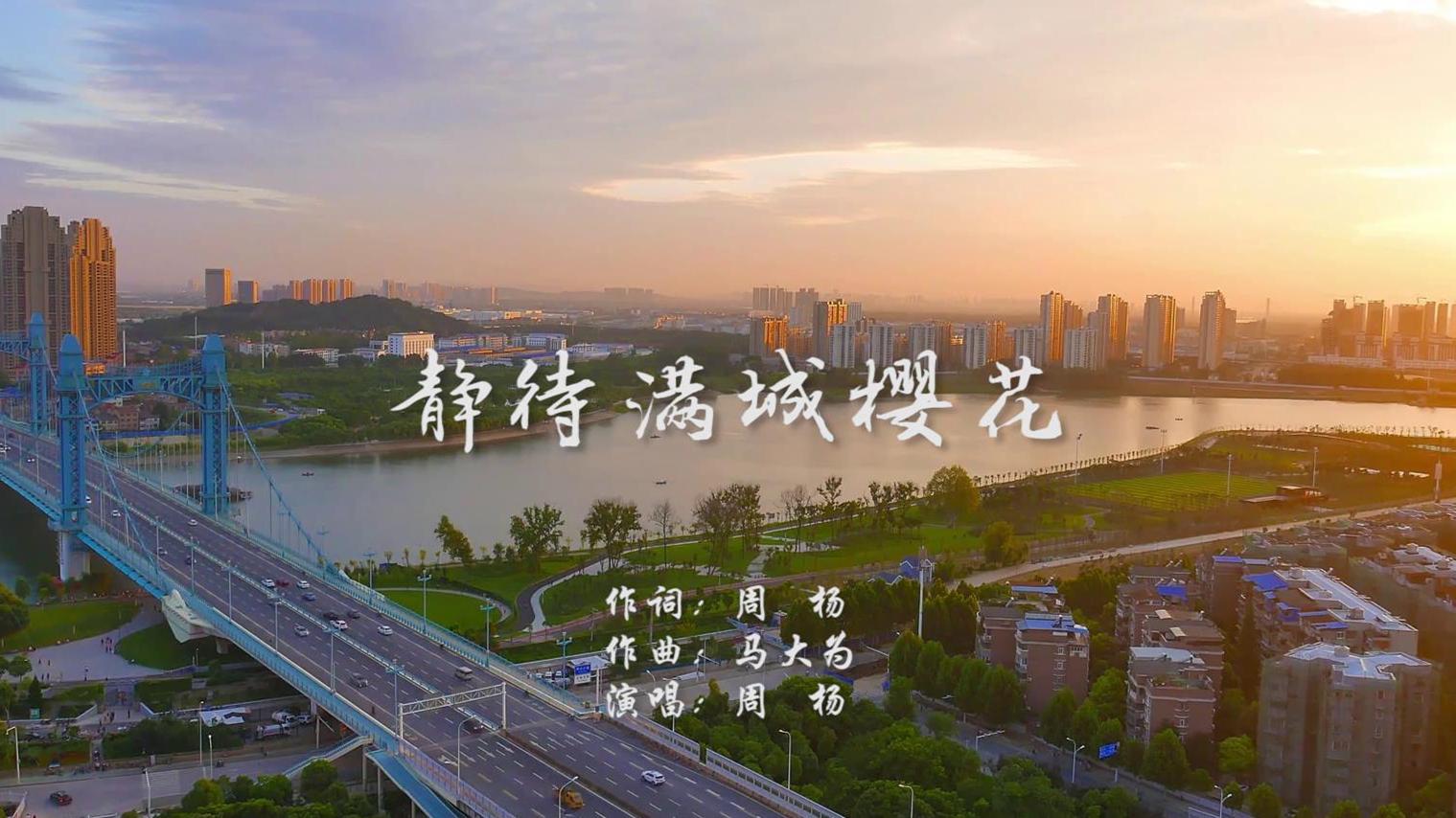静待满城樱花MV 周杨封面图.jpg